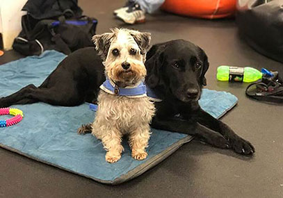 Opal and Leila our therapy dogs